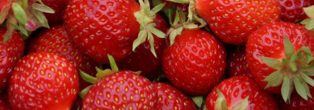Venez cueillir vos fraises