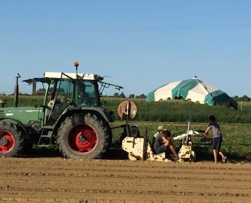 Tracteur et machine plantation fraisiers
