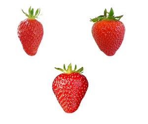 Variétés de fraises