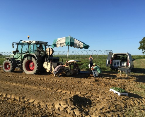 Réglage machine plantation fraise